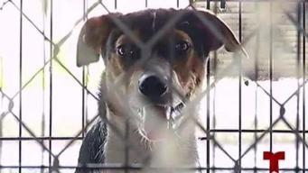 Artefacto explosivo estalla en hocico de un perrito