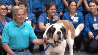 Perro terapéutico alegra al Hospital de Hartford