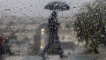 Cortes de energía y árboles caídos por lluvia y viento en Connecticut