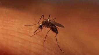4 casos más del Virus del Nilo reportados en Connecticut