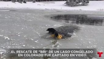 Rescatan cachorro de un lago congelado