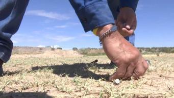 Residentes en Nuevo México temen por su seguridad