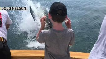 Salta tiburón a solo pies del bote de una familia