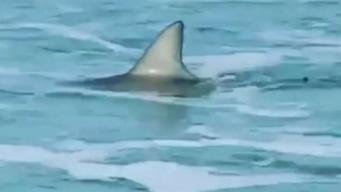 Niña de 9 años es mordida por un tiburón en Florida