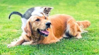 Sal a desocupar los albergues de mascotas en agosto