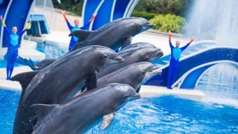 SeaWorld despide a varios empleados en Orlando y Tampa