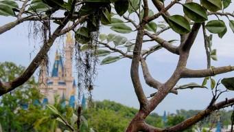 Denuncian robo de artículos en Disney de miles de dólares