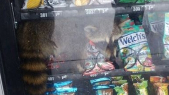 Estudiantes se llevan sorpresa en máquina de dulces