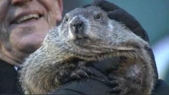 """La marmota Phil """"predijo"""" que el invierno será más..."""