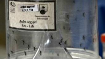 Zika por transfusión; muertes por mal ligado al virus