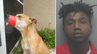 Arrestan a acusado de sellarle la boca a un perro
