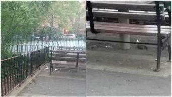 """""""Rata York"""" obtiene nuevo récord en infestación de roedores"""