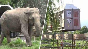 """Riesgoso: elefanta """"Ramba"""" viaja de Chile a Brasil tras años de maltrato"""