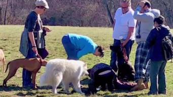 Asesinan a cachorro en parque de Framingham