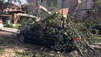 Árboles caídos y miles sin electricidad por vientos
