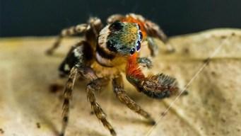 Nombran nueva especie de araña como famoso diseñador