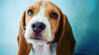 Mascotas seguras y protegidas en calor extremo