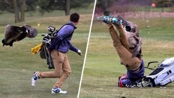 En video: ganso enfurecido ataca a joven golfista