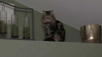 Paga $1,500 al mes por un apartamento para sus gatos