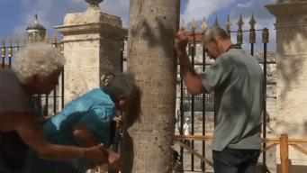 La tradición de la ceiba de La Habana