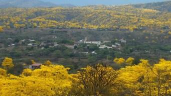 """Regalo de fin de año"": surge impactante bosque de ""oro"""