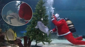 Santa nada con peces y tiburones para llevarles regalos