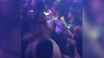 Revocan licencia de discoteca tras presencia de caballo