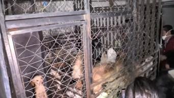 Acusan a mujer de vender carne de perro en México