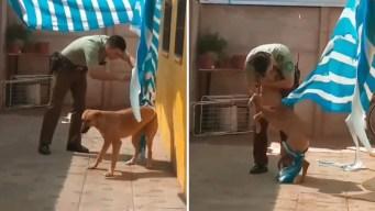 "Caricia al alma: perro ""abraza"" al hombre que lo rescató"