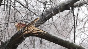 Muere mujer al caerle rama de árbol en Loudoun