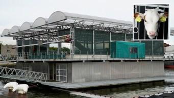 Increíble: cómo es la primera granja flotante del mundo