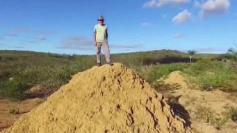 Increíble: descubren magalópolis de termitas
