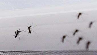Mosquitos pueden transmitir zika a sus huevos y larvas