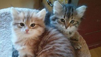 Puedes adoptar un gato aunque seas alérgico