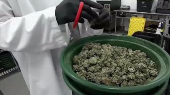 Representantes buscan legalizar marihuana en Connecticut