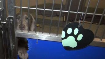 Mascotas buscan un hogar permanente en Methuen