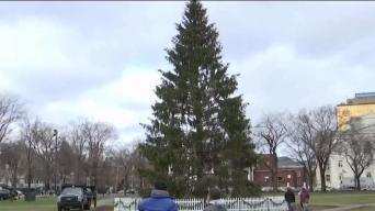 Todo listo para el encendido del árbol en New Haven