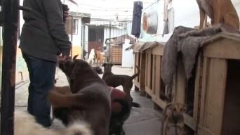 Familia da hogar a 120 mascotas dentro de su residencia