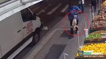 Joven busca a su perrito robado en Brooklyn