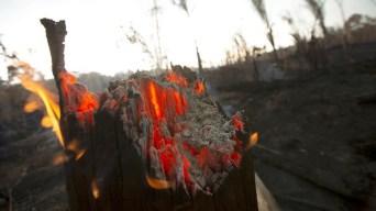 Embate entre presidentes desde que la Amazonia arde
