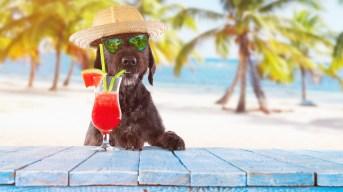 Cómo proteger a tu mascota en el verano