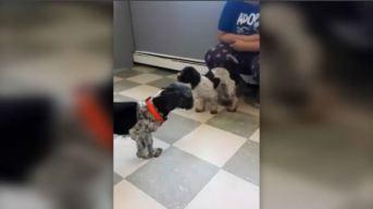 Mujer trata de vender perros en pésimas condiciones en Lynn