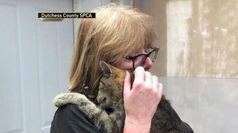 Se reúne con su gato perdido tras 11 años