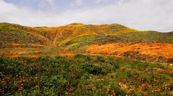 11 lugares alternativos para ver flores silvestres