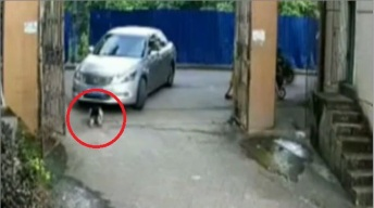 Niña jugaba en la calle y auto le pasa por encima