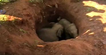 Giro inesperado en rescate de dos elefantitos