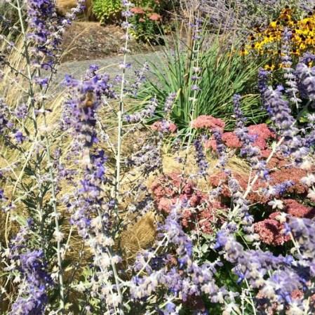 Fotos 12 plantas que atraen buenas vibras a tu casa for Enanos jardin traen mala suerte