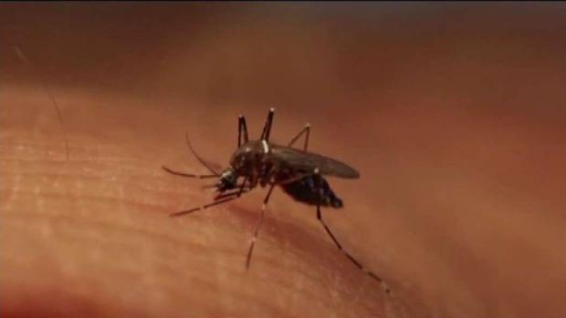 [TLMD - Boston] Aumenta alerta sobre mosquitos con EEE en Massachusetts