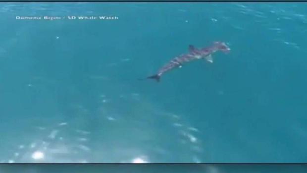 [TLMD - SD] Avistamiento de un tiburón martillo