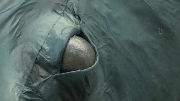 [TLMD - NATL] Ballena emerge en el patio de la ONU para defender los océanos